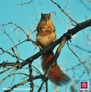 SquirrelAquaBlueSkyBranches