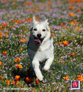 doginfieldflowersRennettStoweFCC1