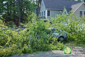 BA2_treedowncarclose0220